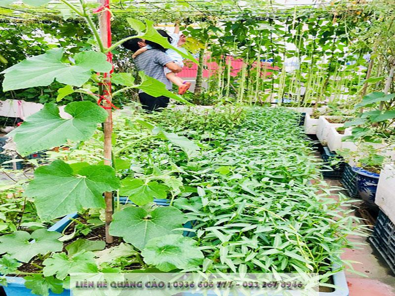 Vườn sân thượng 40 m2tốtnhư trang trại