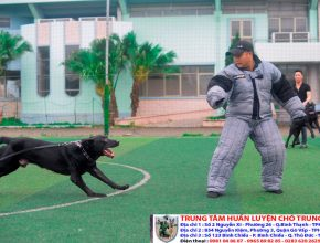 Các cách huấn luyện chó cơ bản nhất