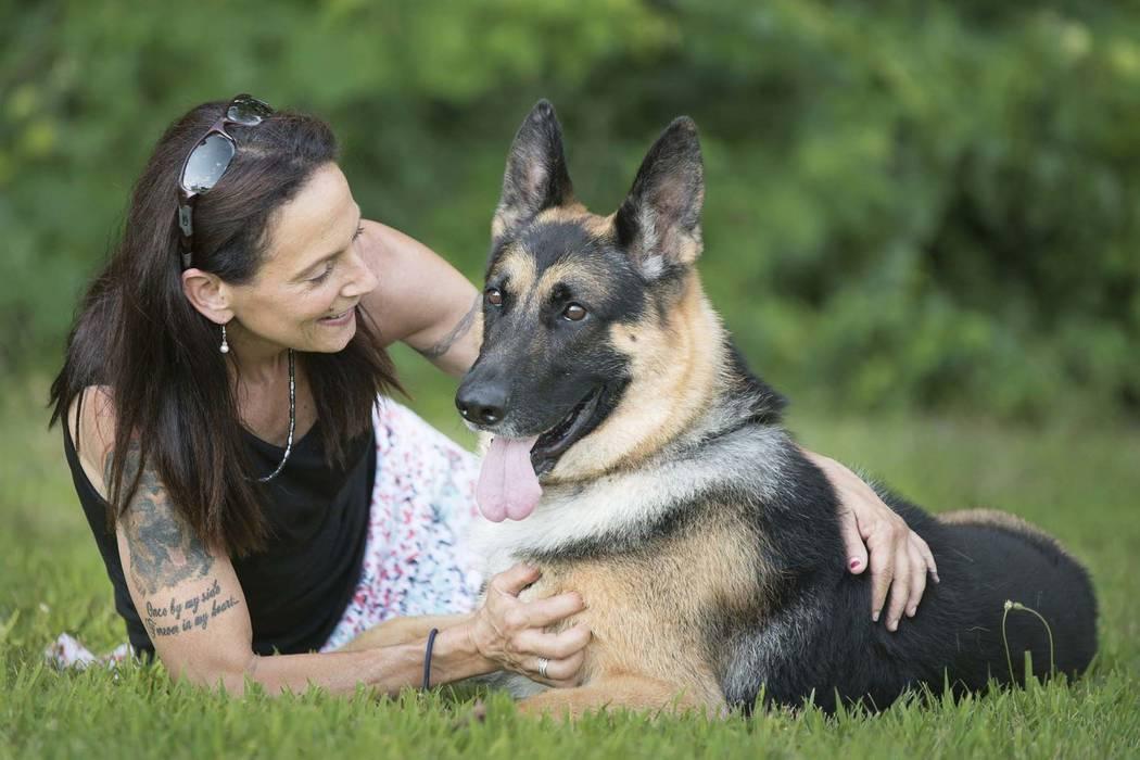 Huấn luyện chó Becgie biết nghe mệnh lệnh cơ bản như đứng, ngồi, nằm