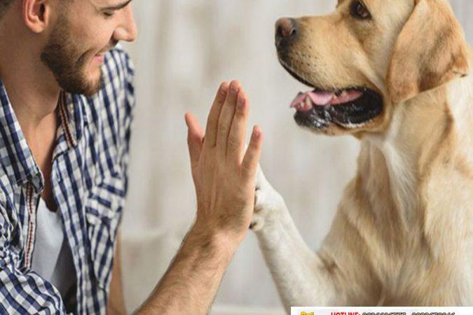 Nghiên cứu mới: Vì sao chó có thể hiểu tiếng người?