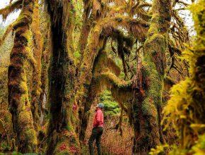 Lạc vào thế giới cổ tích kỳ bí ở cánh rừng nước Mỹ