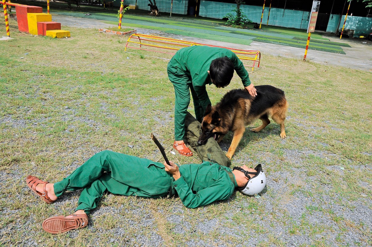 Địa chỉ huấn luyện chó cảnh khuyển uy tín nhất 2021